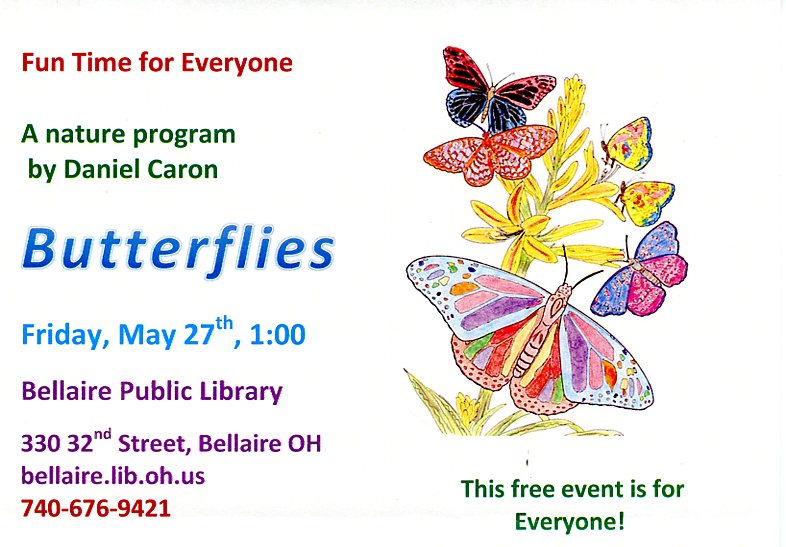 colored butterflies, a nature program by Daniel Caron